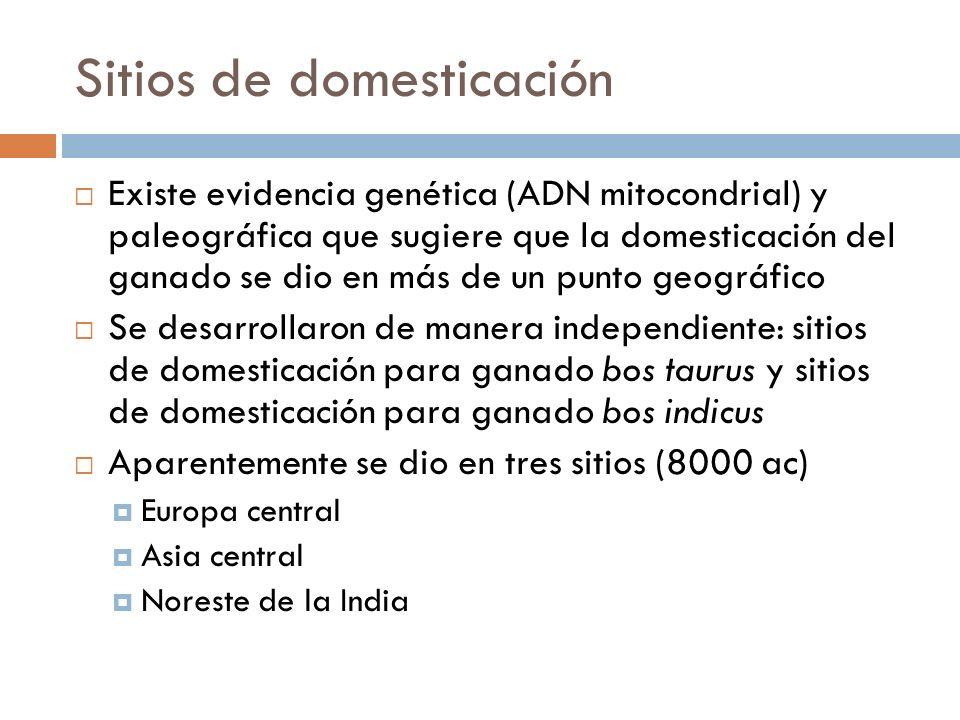Sitios de domesticación Existe evidencia genética (ADN mitocondrial) y paleográfica que sugiere que la domesticación del ganado se dio en más de un pu