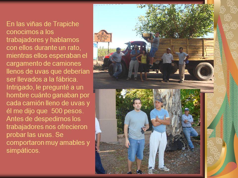 En las viñas de Trapiche conocimos a los trabajadores y hablamos con ellos durante un rato, mientras ellos esperaban el cargamento de camiones llenos de uvas que deberían ser llevados a la fábrica.