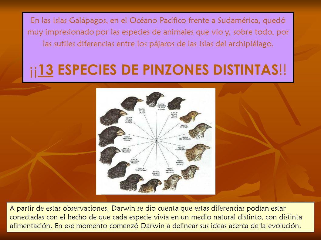 En las islas Galápagos, en el Océano Pacífico frente a Sudamérica, quedó muy impresionado por las especies de animales que vio y, sobre todo, por las