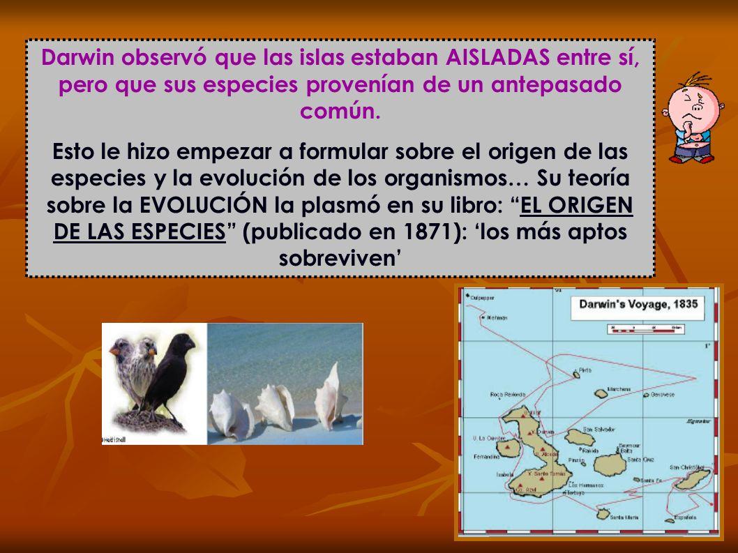 Darwin observó que las islas estaban AISLADAS entre sí, pero que sus especies provenían de un antepasado común. Esto le hizo empezar a formular sobre