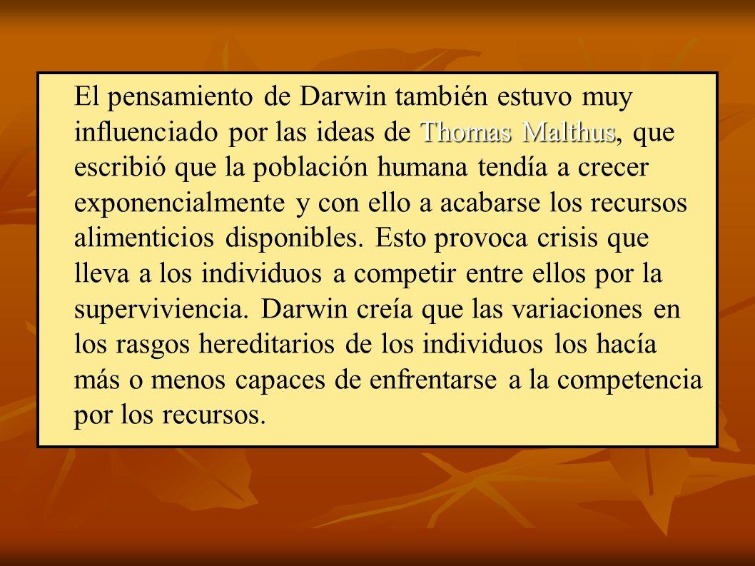Thomas Malthus El pensamiento de Darwin también estuvo muy influenciado por las ideas de Thomas Malthus, que escribió que la población humana tendía a