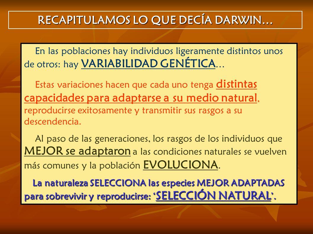 RECAPITULAMOS LO QUE DECÍA DARWIN… En las poblaciones hay individuos ligeramente distintos unos de otros: hay VARIABILIDAD GENÉTICA … Estas variacione