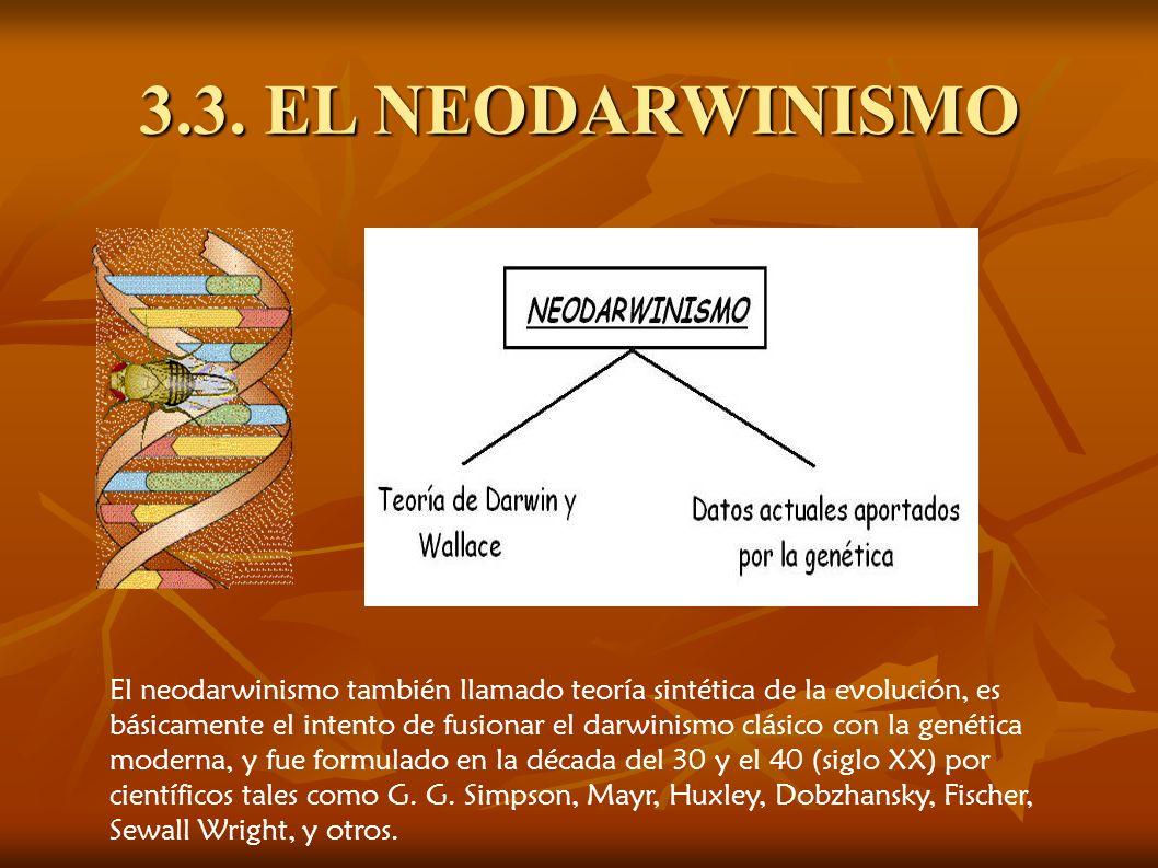 3.3. EL NEODARWINISMO El neodarwinismo también llamado teoría sintética de la evolución, es básicamente el intento de fusionar el darwinismo clásico c