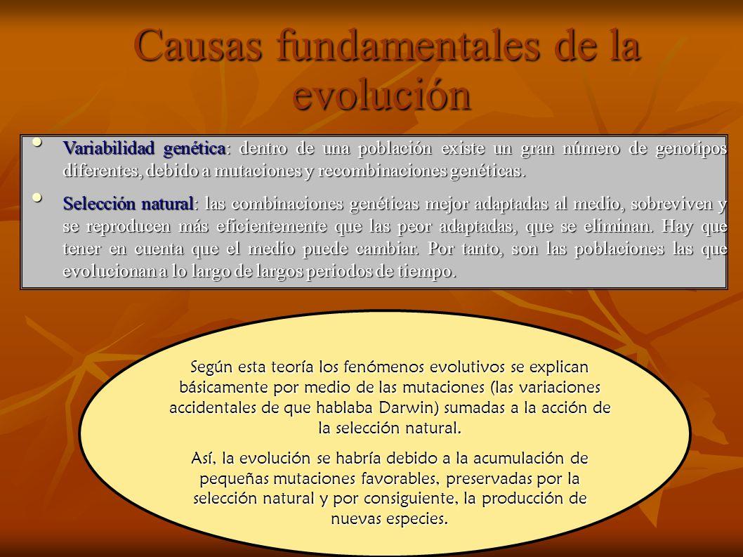 Causas fundamentales de la evolución Causas fundamentales de la evolución Variabilidad genética: dentro de una población existe un gran número de geno