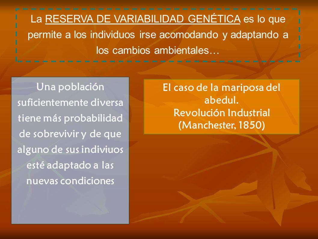El caso de la mariposa del abedul. Revolución Industrial (Manchester, 1850) La RESERVA DE VARIABILIDAD GENÉTICA es lo que permite a los individuos irs