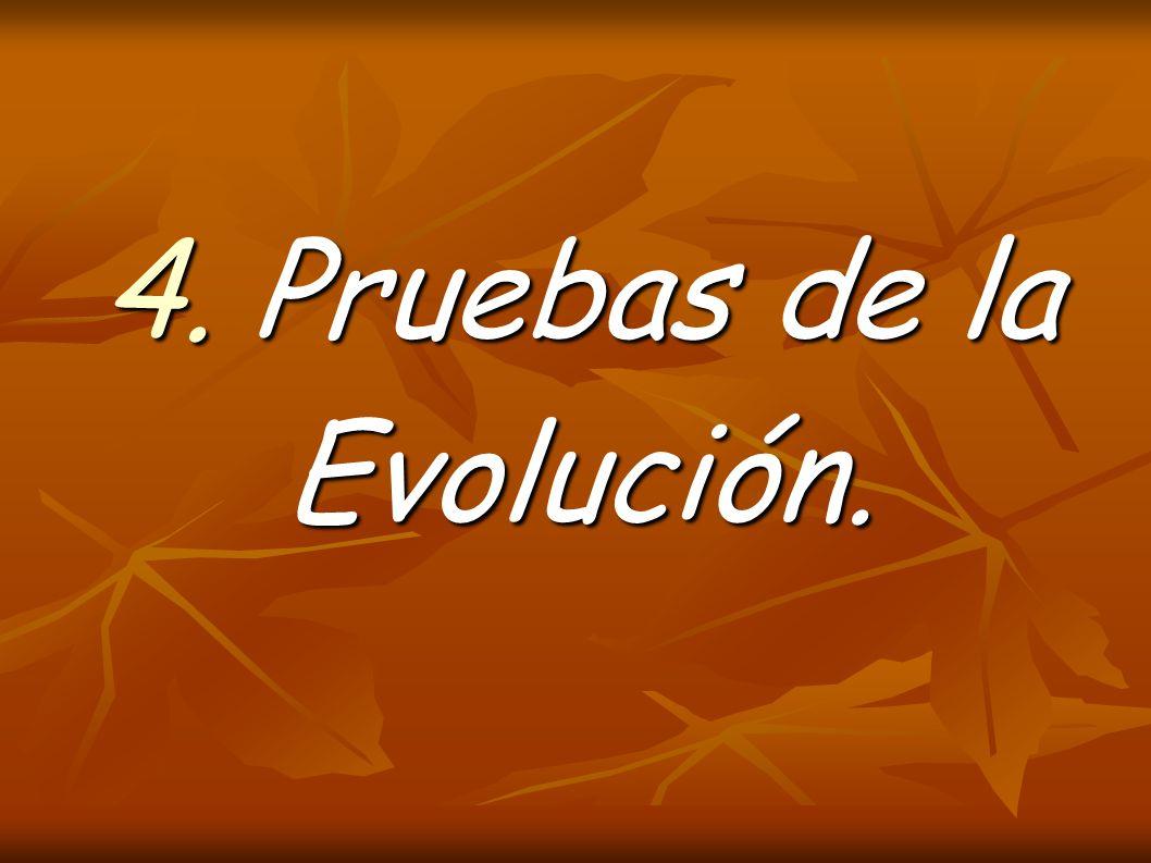 4. Pruebas de la Evolución.