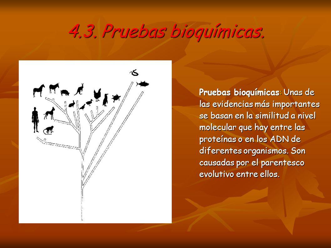 4.3. Pruebas bioquímicas. Pruebas bioquímicas: Unas de las evidencias más importantes se basan en la similitud a nivel molecular que hay entre las pro