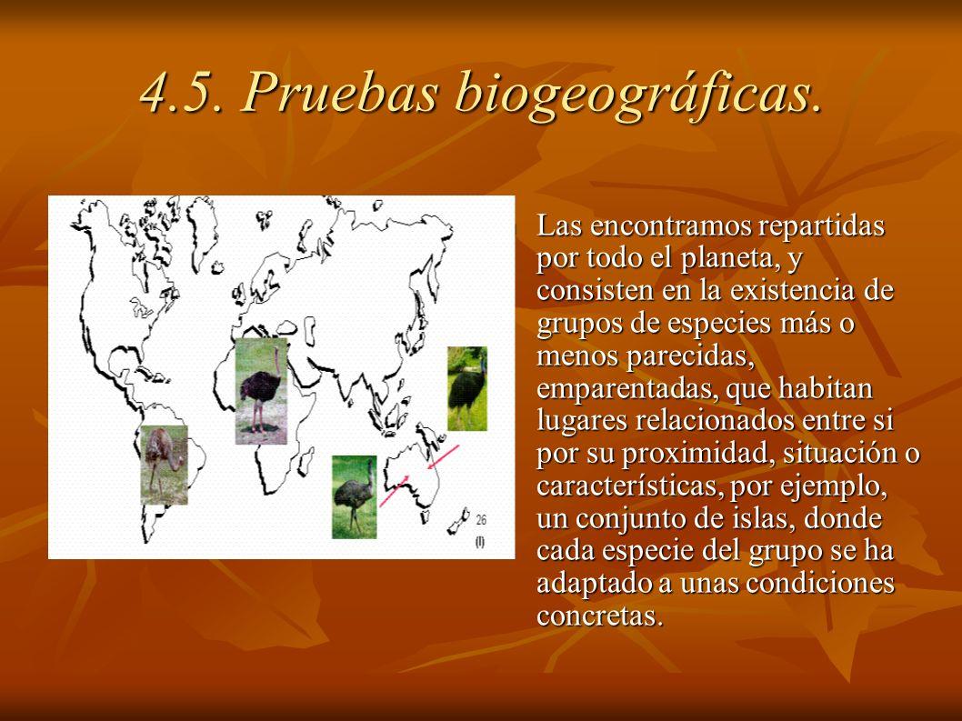 Las encontramos repartidas por todo el planeta, y consisten en la existencia de grupos de especies más o menos parecidas, emparentadas, que habitan lu