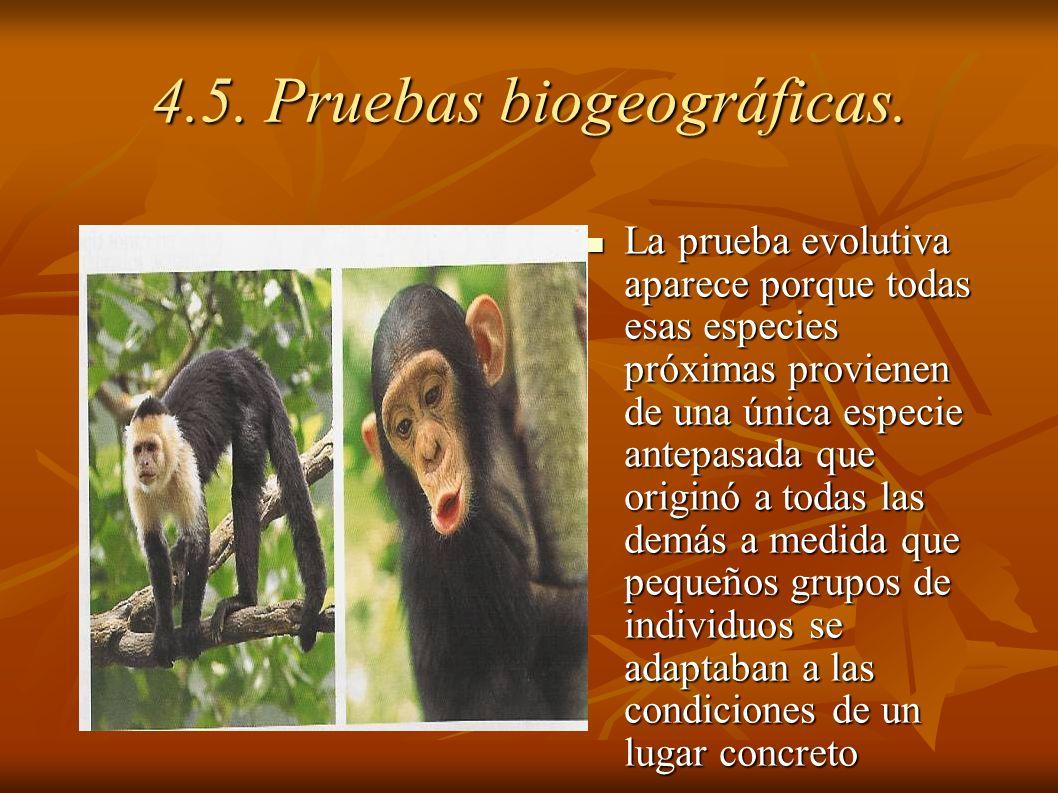 La prueba evolutiva aparece porque todas esas especies próximas provienen de una única especie antepasada que originó a todas las demás a medida que p