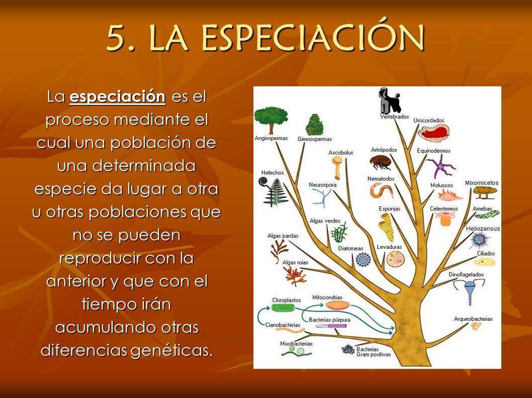 5. LA ESPECIACIÓN La especiación es el proceso mediante el cual una población de una determinada especie da lugar a otra u otras poblaciones que no se