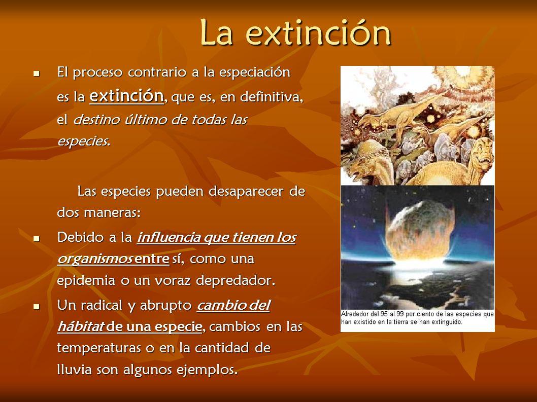 La extinción El proceso contrario a la especiación es la extinción, que es, en definitiva, el destino último de todas las especies. El proceso contrar