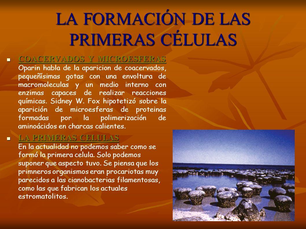 LA FORMACIÓN DE LAS PRIMERAS CÉLULAS COACERVADOS Y MICROESFERAS COACERVADOS Y MICROESFERAS Oparin habla de la aparicion de coacervados, pequeñísimas g