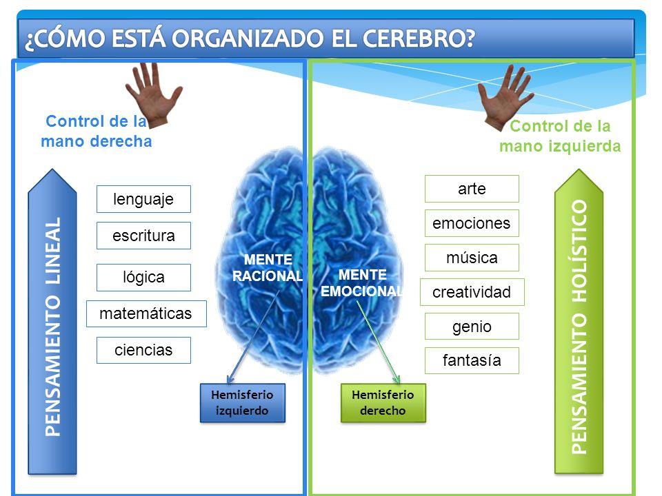 MENTE RACIONAL Control de la mano derecha Hemisferio izquierdo lenguaje escritura lógica matemáticas ciencias PENSAMIENTO LINEAL Control de la mano iz