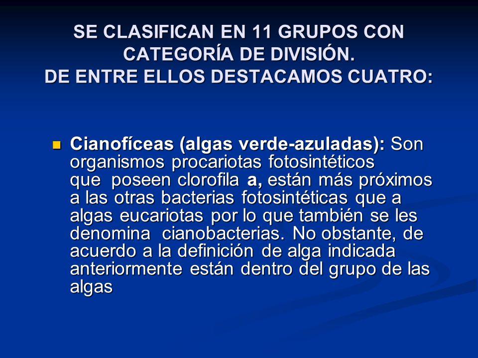 SE CLASIFICAN EN 11 GRUPOS CON CATEGORÍA DE DIVISIÓN.