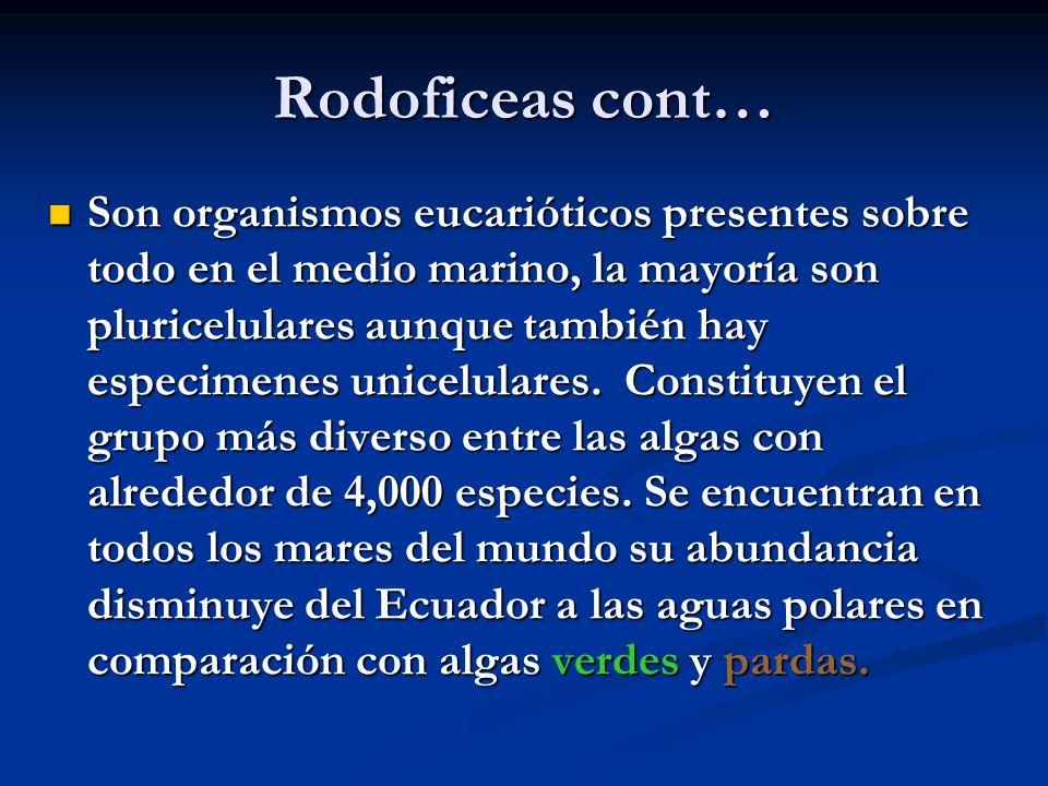 Rodoficeas cont… Son organismos eucarióticos presentes sobre todo en el medio marino, la mayoría son pluricelulares aunque también hay especimenes unicelulares.