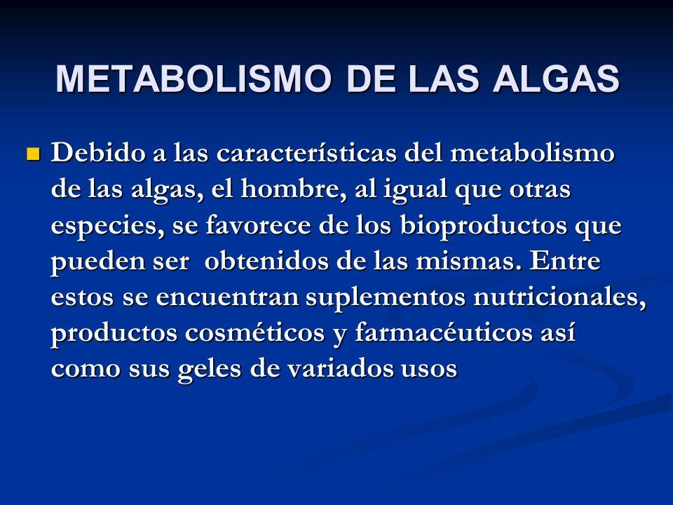 METABOLISMO DE LAS ALGAS Debido a las características del metabolismo de las algas, el hombre, al igual que otras especies, se favorece de los bioproductos que pueden ser obtenidos de las mismas.