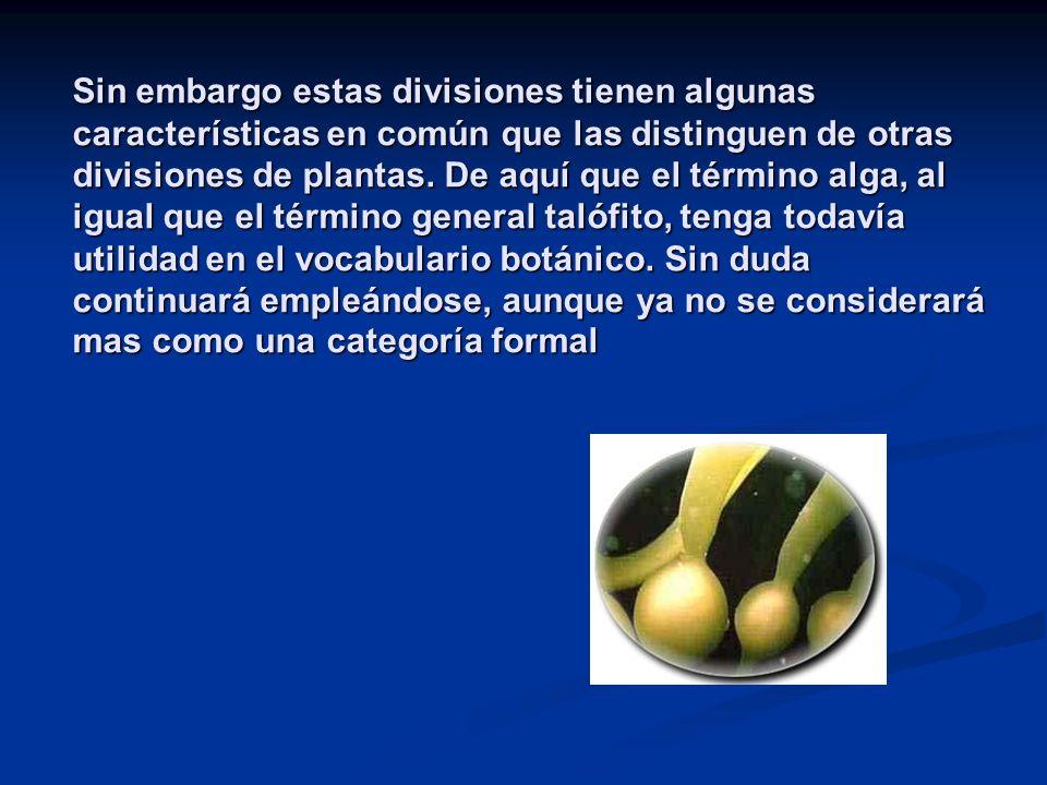 Sin embargo estas divisiones tienen algunas características en común que las distinguen de otras divisiones de plantas.