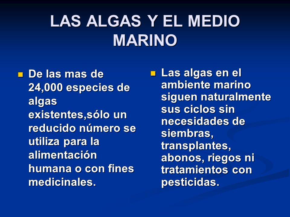 LAS ALGAS Y EL MEDIO MARINO De las mas de 24,000 especies de algas existentes,sólo un reducido número se utiliza para la alimentación humana o con fines medicinales.
