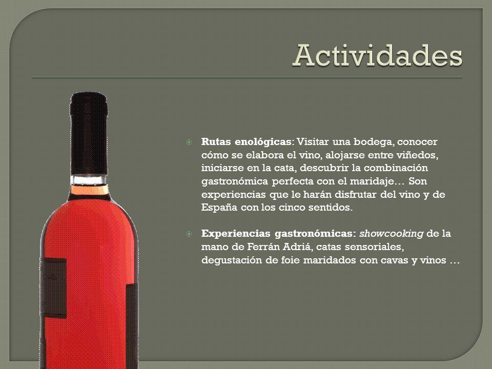 Rutas enológicas: Visitar una bodega, conocer cómo se elabora el vino, alojarse entre viñedos, iniciarse en la cata, descubrir la combinación gastronó