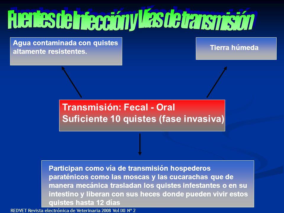 Transmisión: Fecal - Oral Suficiente 10 quistes (fase invasiva) Agua contaminada con quistes altamente resistentes. Tierra húmeda Participan como vía