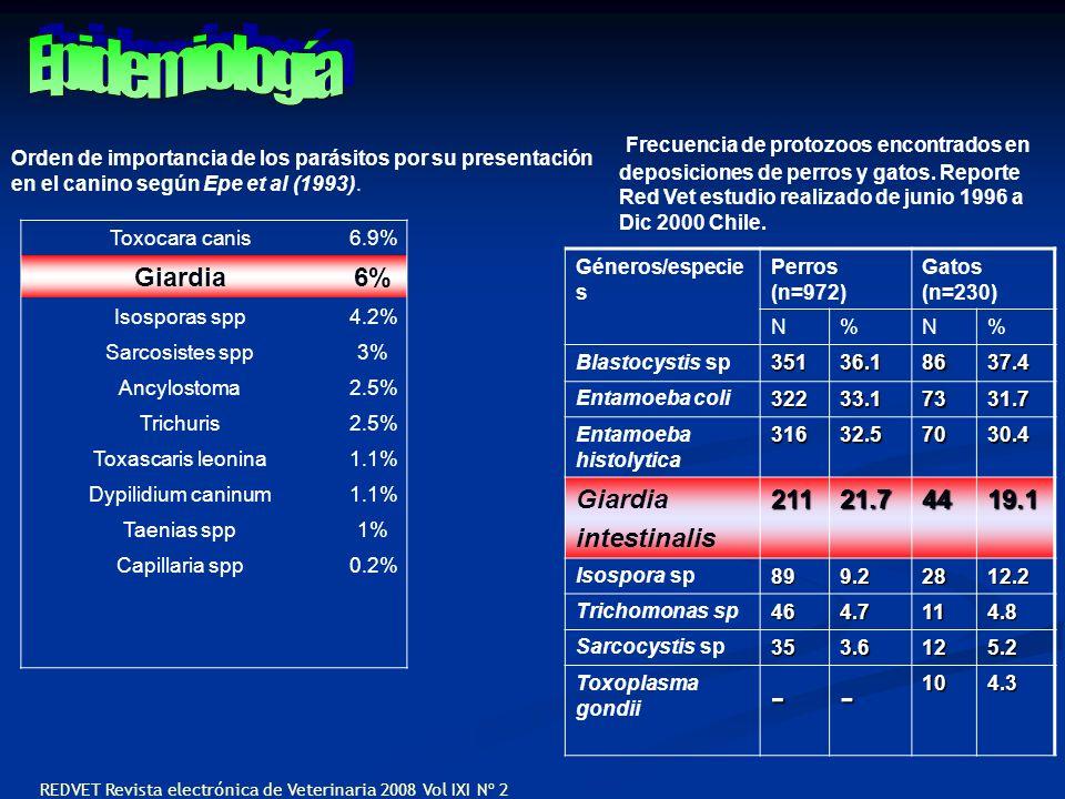 Orden de importancia de los parásitos por su presentación en el canino según Epe et al (1993). Toxocara canis6.9% Giardia6% Isosporas spp4.2% Sarcosis