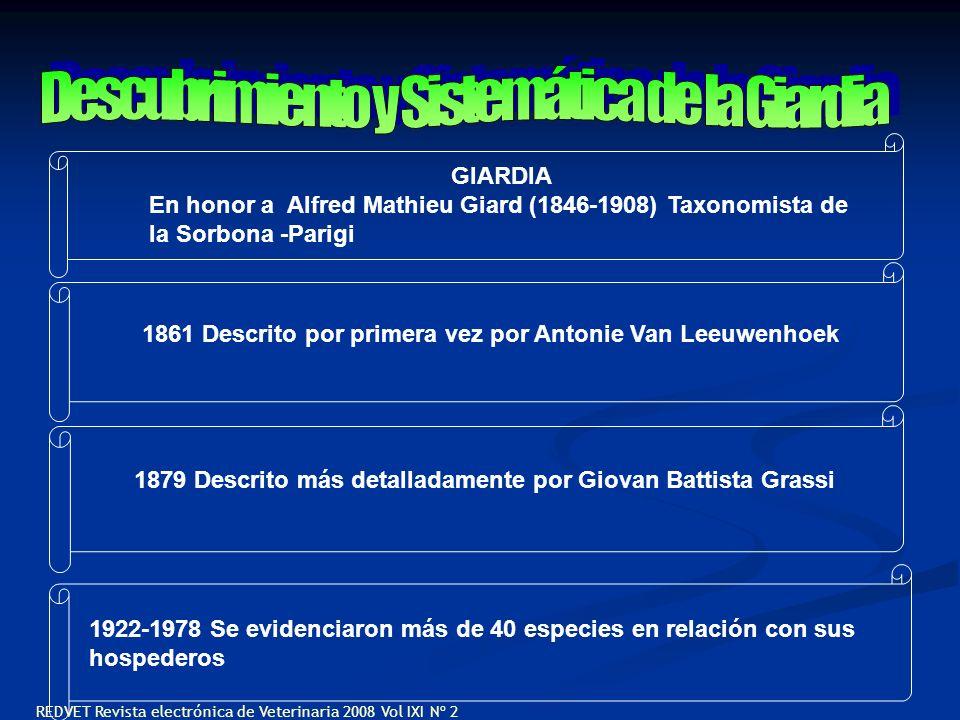 GIARDIA En honor a Alfred Mathieu Giard (1846-1908) Taxonomista de la Sorbona -Parigi 1861 Descrito por primera vez por Antonie Van Leeuwenhoek 1879 D
