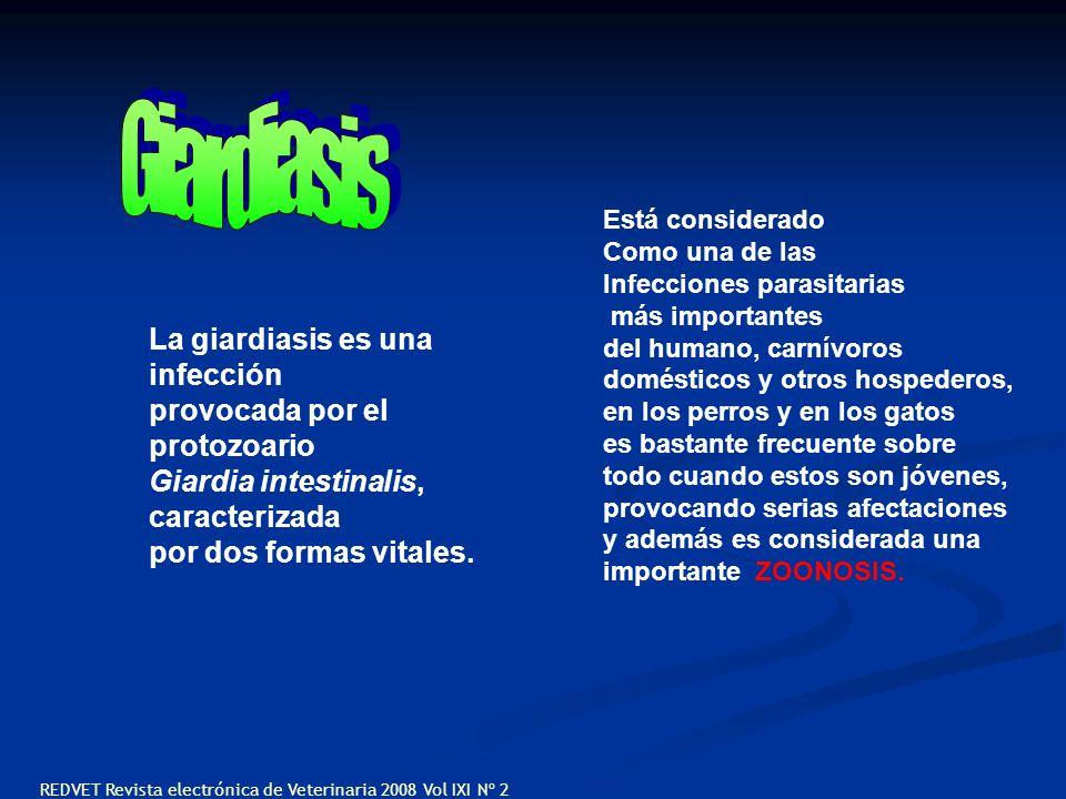 La giardiasis es una infección provocada por el protozoario Giardia intestinalis, caracterizada por dos formas vitales. Está considerado Como una de l