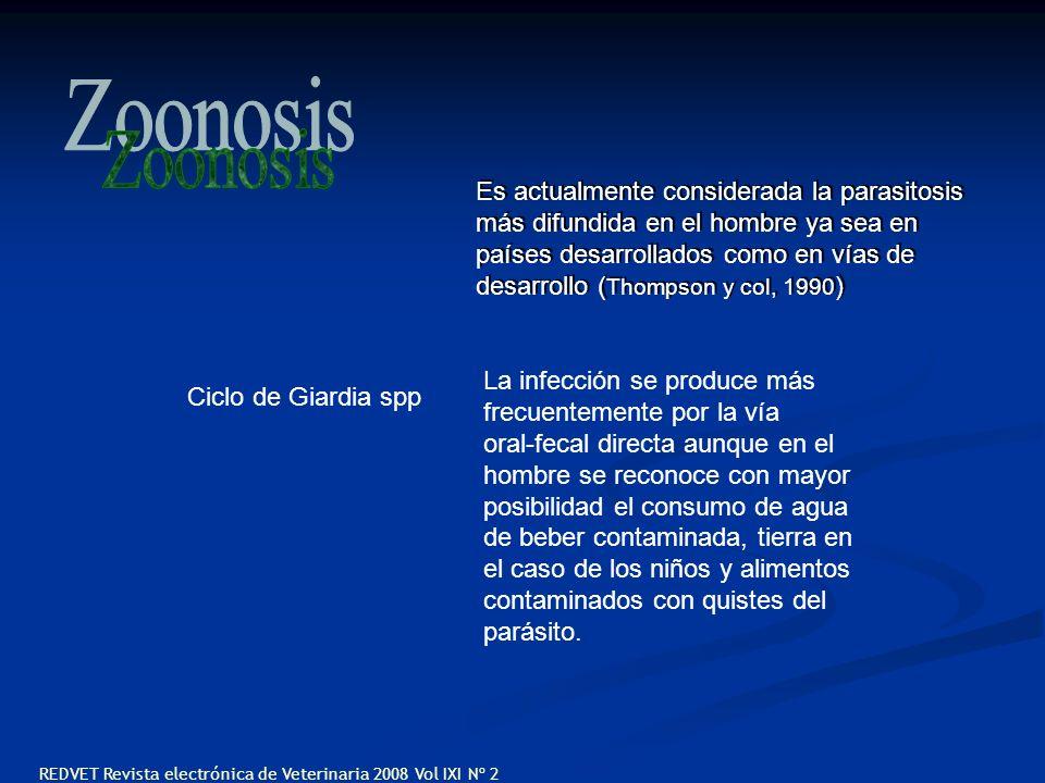 Ciclo de Giardia spp Es actualmente considerada la parasitosis más difundida en el hombre ya sea en países desarrollados como en vías de desarrollo (