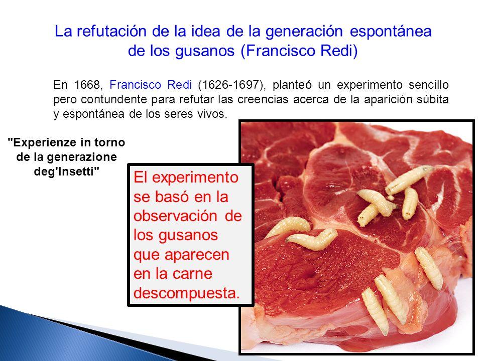 La refutación de la idea de la generación espontánea de los gusanos (Francisco Redi) En 1668, Francisco Redi (1626-1697), planteó un experimento senci