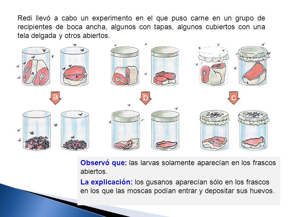 Redi llevó a cabo un experimento en el que puso carne en un grupo de recipientes de boca ancha, algunos con tapas, algunos cubiertos con una tela delg