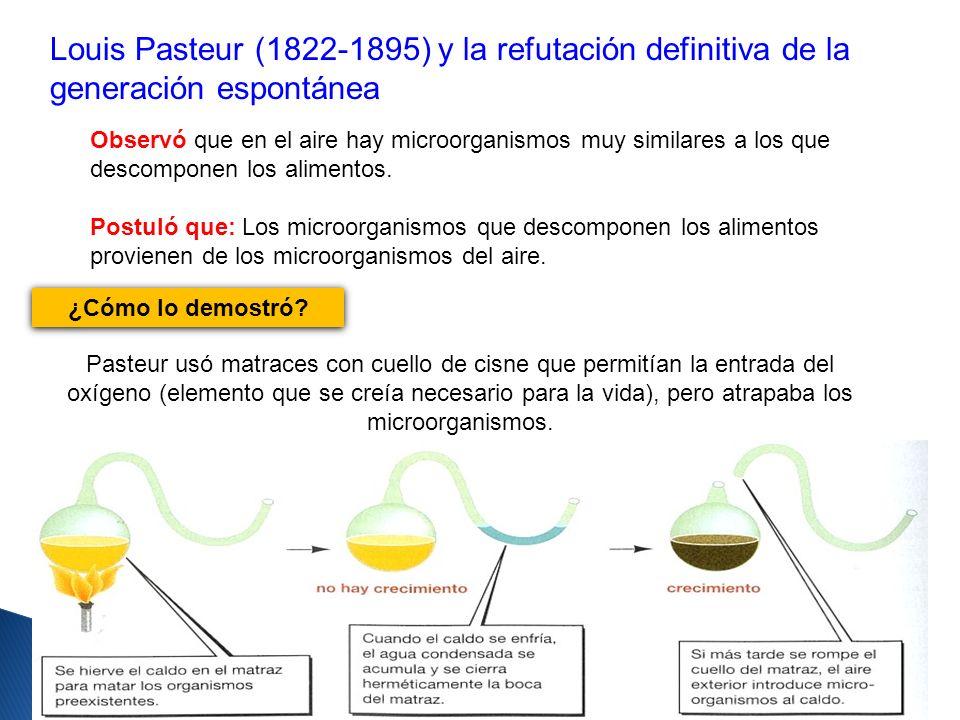 Pasteur usó matraces con cuello de cisne que permitían la entrada del oxígeno (elemento que se creía necesario para la vida), pero atrapaba los microo