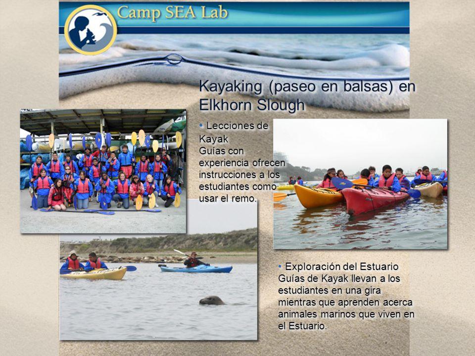 Kayaking (paseo en balsas) en Elkhorn Slough Exploración del Estuario Exploración del Estuario Guías de Kayak llevan a los estudiantes en una gira mientras que aprenden acerca animales marinos que viven en el Estuario.