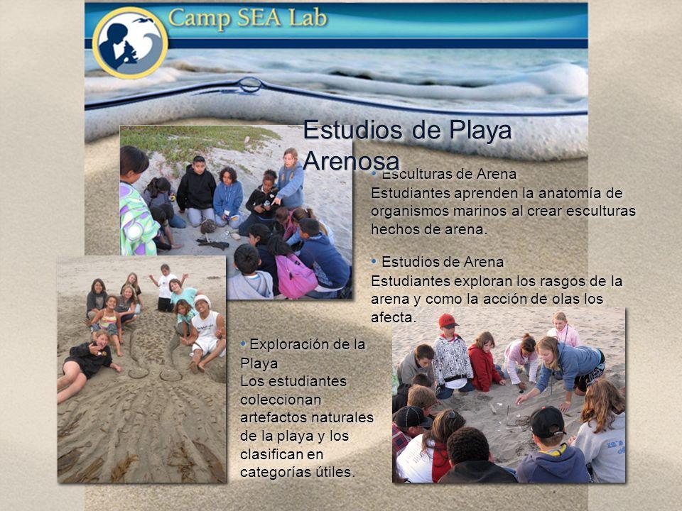Exploración de la Playa Los estudiantes coleccionan artefactos naturales de la playa y los clasifican en categorías útiles.