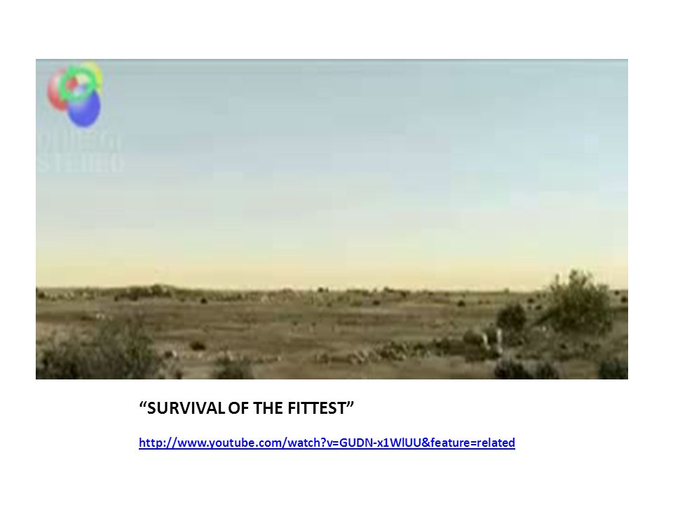 SURVIVAL OF THE FITTEST http://www.youtube.com/watch?v=GUDN-x1WlUU&feature=related