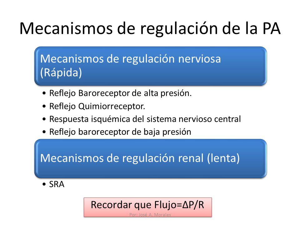 Mecanismos de regulación de la PA Recordar que Flujo=P/R Mecanismos de regulación nerviosa (Rápida) Reflejo Baroreceptor de alta presión. Reflejo Quim