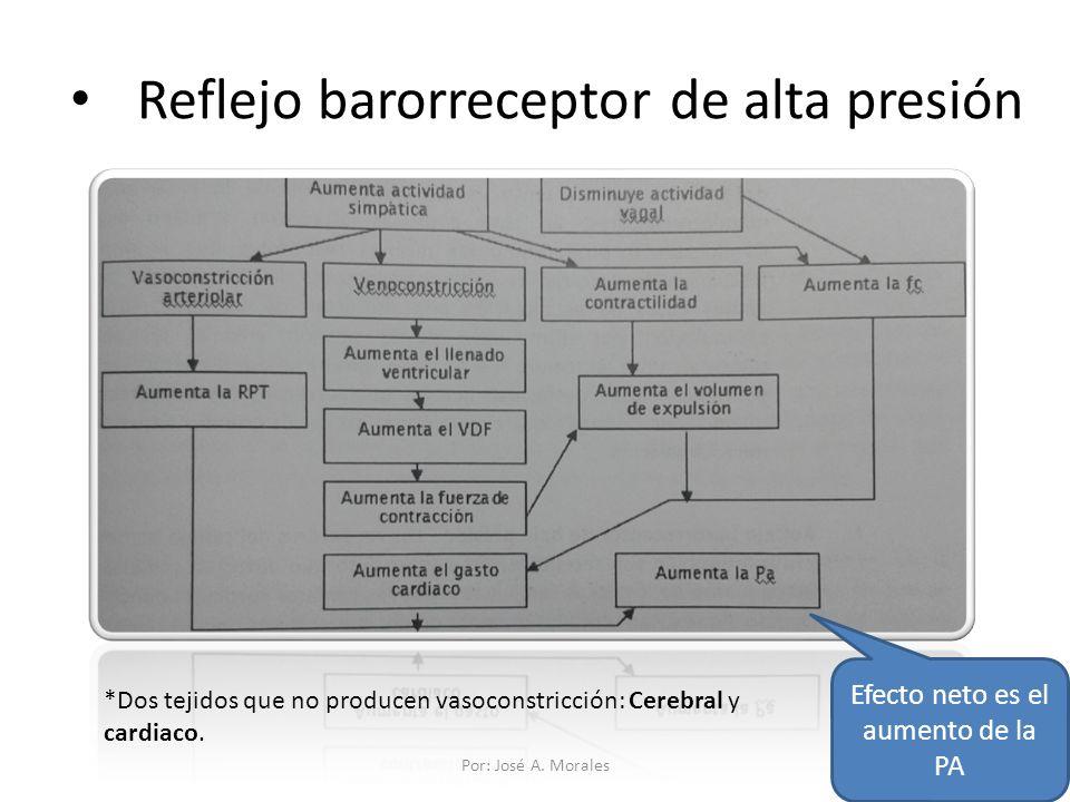 Reflejo barorreceptor de alta presión Efecto neto es el aumento de la PA *Dos tejidos que no producen vasoconstricción: Cerebral y cardiaco. Por: José