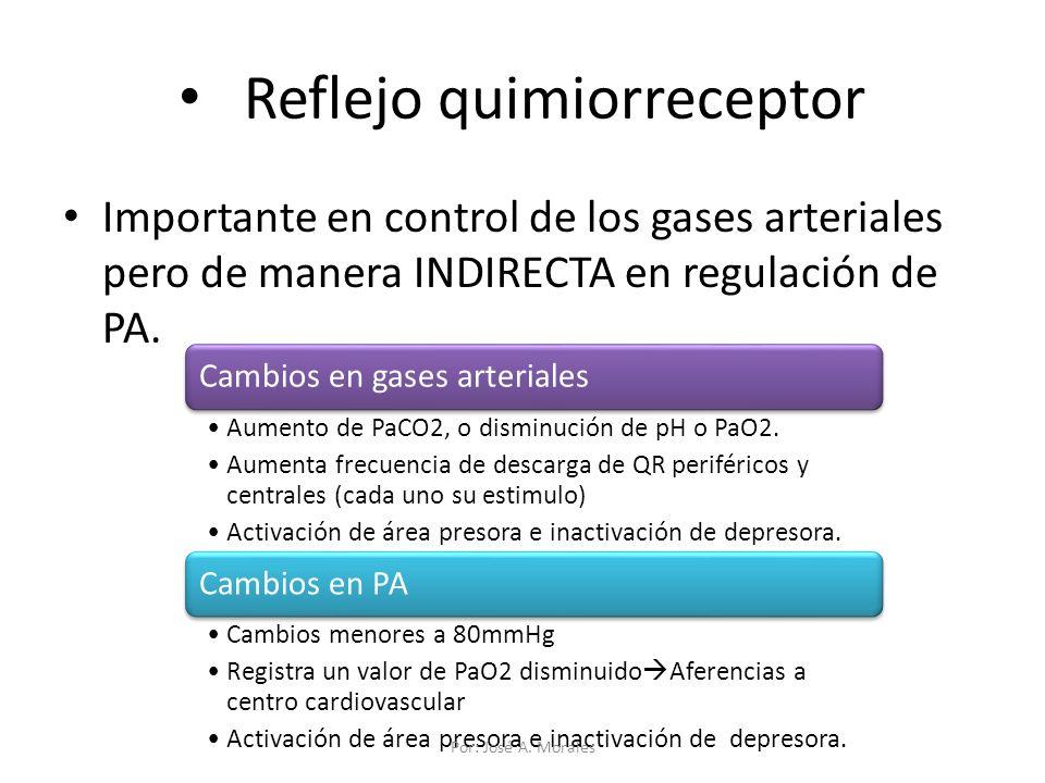 Reflejo quimiorreceptor Importante en control de los gases arteriales pero de manera INDIRECTA en regulación de PA. Cambios en gases arteriales Aument