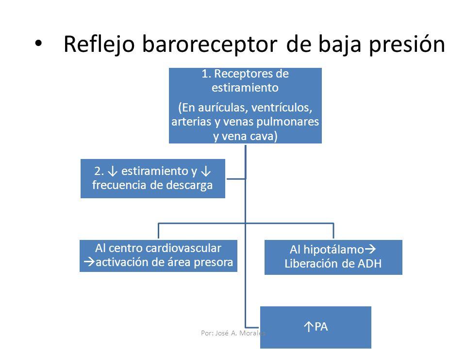 Reflejo baroreceptor de baja presión 1. Receptores de estiramiento (En aurículas, ventrículos, arterias y venas pulmonares y vena cava) Al centro card