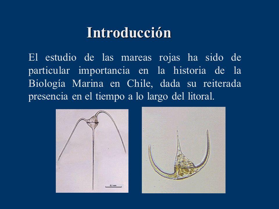 Introducción El estudio de las mareas rojas ha sido de particular importancia en la historia de la Biología Marina en Chile, dada su reiterada presenc
