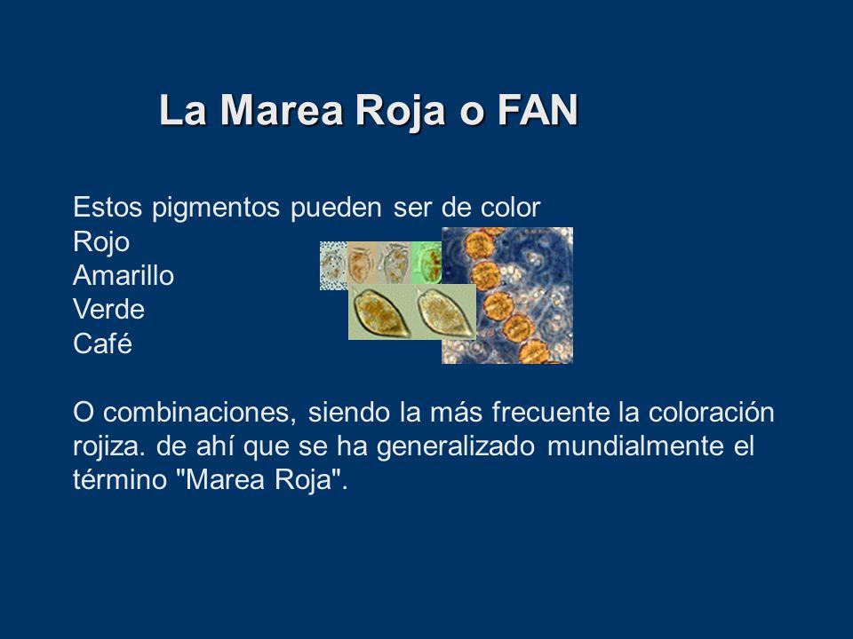 Estos pigmentos pueden ser de color Rojo Amarillo Verde Café O combinaciones, siendo la más frecuente la coloración rojiza. de ahí que se ha generaliz