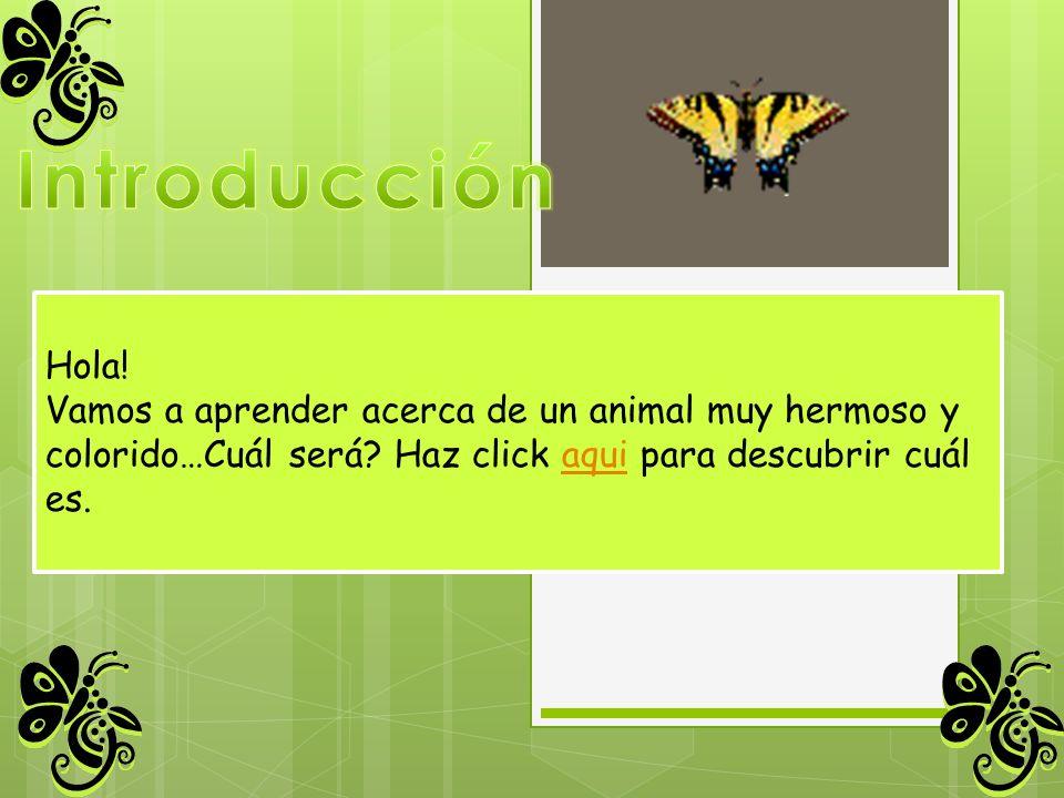 Hola! Vamos a aprender acerca de un animal muy hermoso y colorido…Cuál será? Haz click aqui para descubrir cuálaqui es.