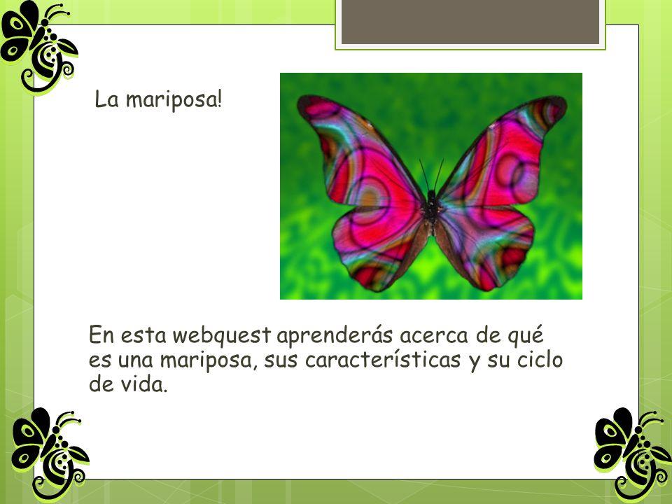 La mariposa! En esta webquest aprenderás acerca de qué es una mariposa, sus características y su ciclo de vida.