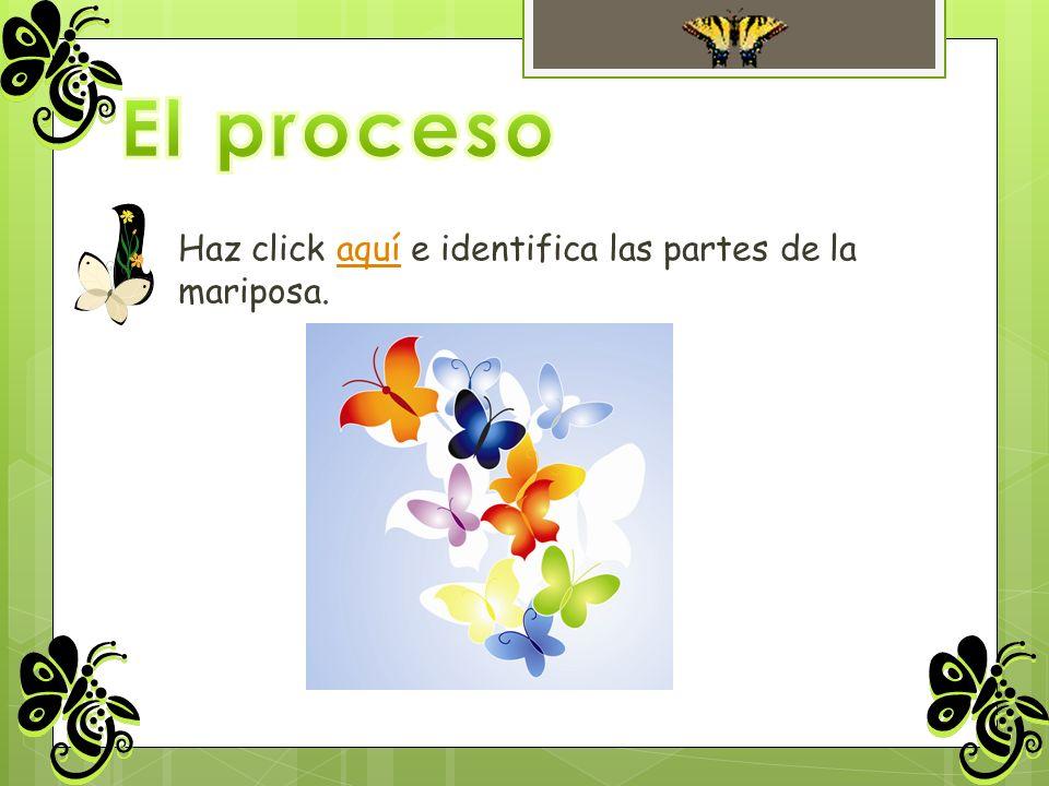 Haz click aquí e identifica las partes de la mariposa.aquí
