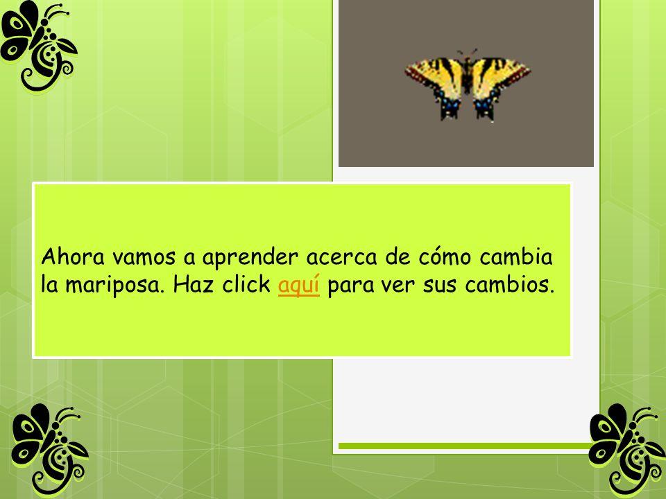 Ahora vamos a aprender acerca de cómo cambia la mariposa. Haz click aquí para ver sus cambios.aquí