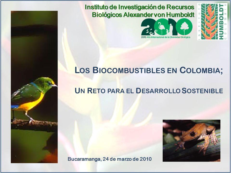 L OS B IOCOMBUSTIBLES EN C OLOMBIA ; U N R ETO PARA EL D ESARROLLO S OSTENIBLE Bucaramanga, 24 de marzo de 2010 Instituto de Investigación de Recursos Biológicos Alexander von Humboldt