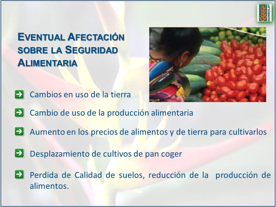 E VENTUAL A FECTACIÓN SOBRE LA S EGURIDAD A LIMENTARIA Aumento en los precios de alimentos y de tierra para cultivarlos Desplazamiento de cultivos de
