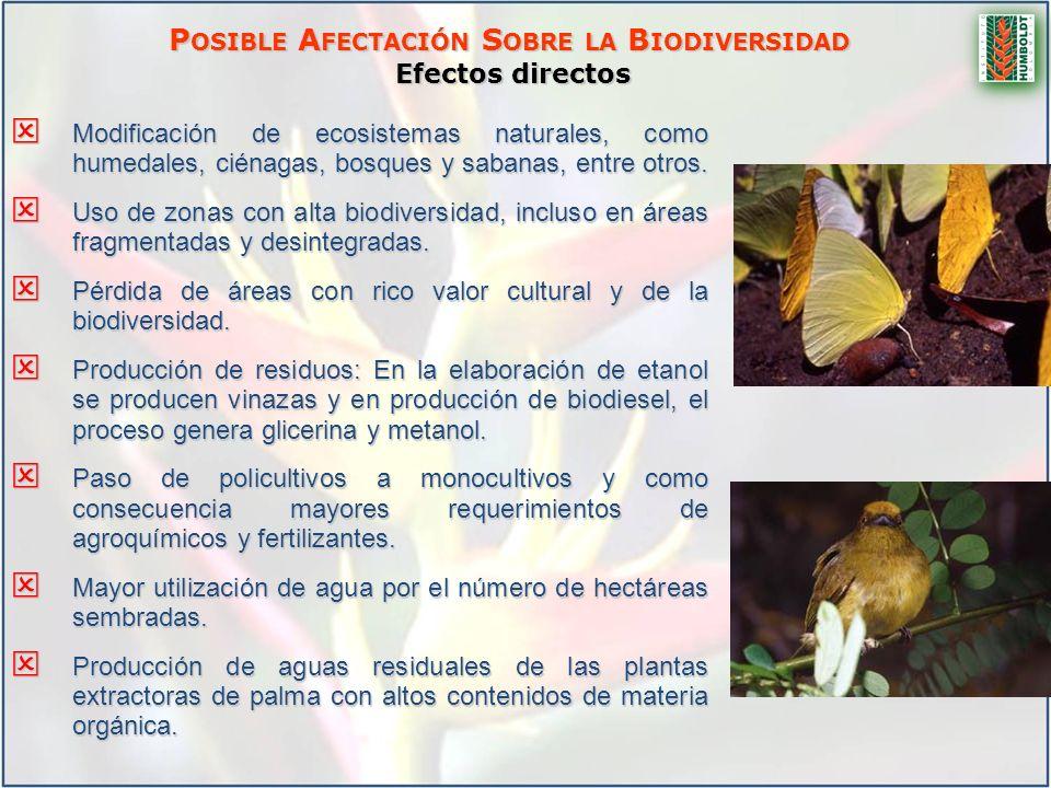 P OSIBLE A FECTACIÓN S OBRE LA B IODIVERSIDAD Efectos directos Modificación de ecosistemas naturales, como humedales, ciénagas, bosques y sabanas, ent