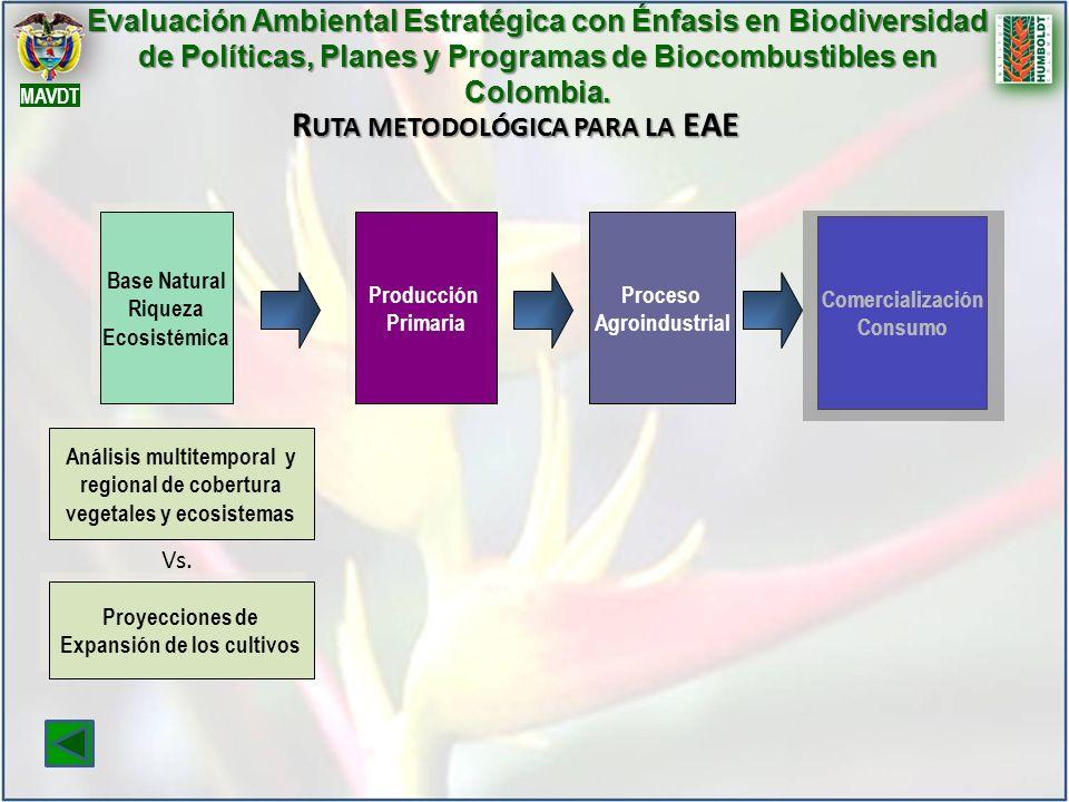 R UTA METODOLÓGICA PARA LA EAE Evaluación Ambiental Estratégica con Énfasis en Biodiversidad de Políticas, Planes y Programas de Biocombustibles en Co