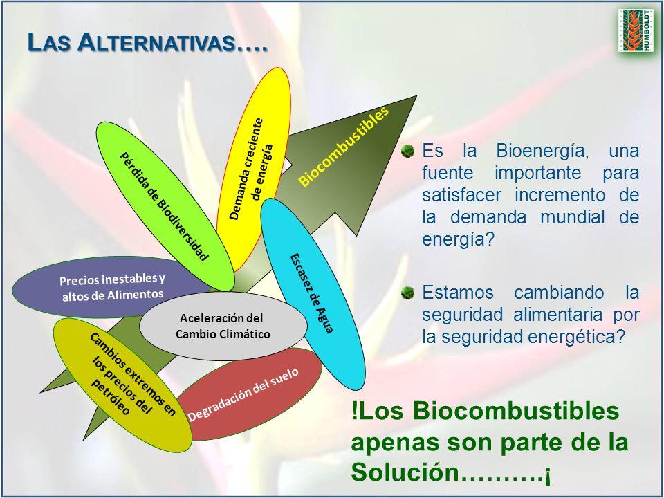 !Los Biocombustibles apenas son parte de la Solución……….¡ Degradación del suelo Demanda creciente de energía Precios inestables y altos de Alimentos C