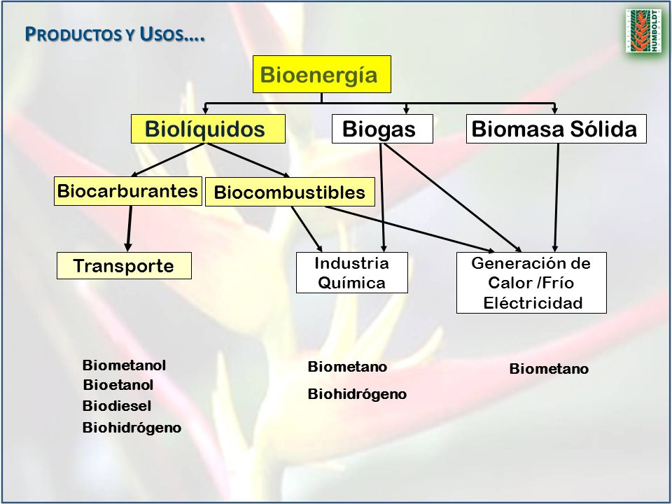 Bioenergía Biolíquidos Biocarburantes Transporte BiogasBiomasa Sólida Generación de Calor /Frío Eléctricidad Industria Química Biodiesel Bioetanol Bio